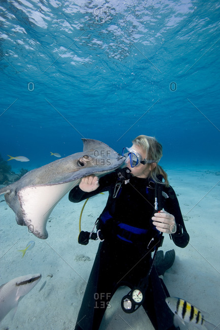 Scuba diver interacts with Southern Stingrays at Stingray City, Grand Cayman