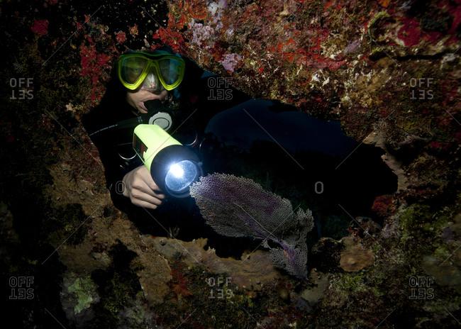 Diver illuminates sea fan during night dive