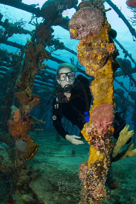 Scuba diver framed by the remnants of the Willaurie shipwreck