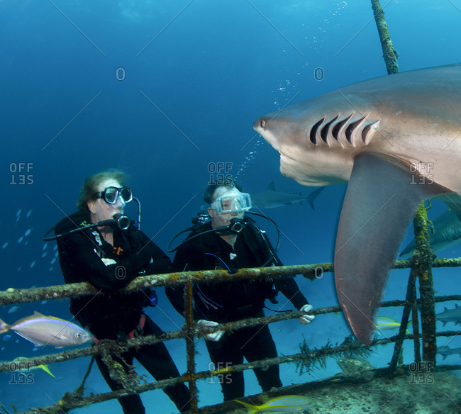 Divers watch an approaching shark on the Ray of Hope shipwreck, Bahamas