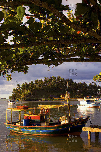 Fishing boat moored under a tree