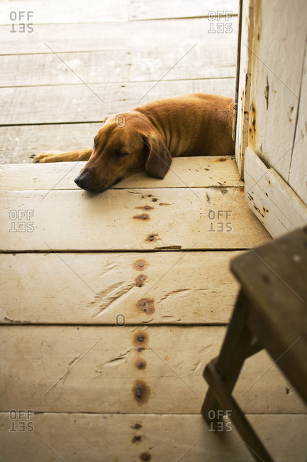 Cute dog lying in doorway