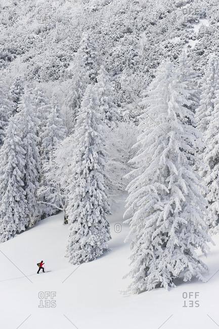 Young man doing telemark skiing in Herzogstand mountain forest