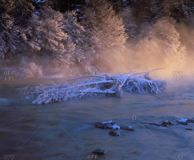 Upper Bavaria, Geretsried, View of frosted dead plant in River Isar
