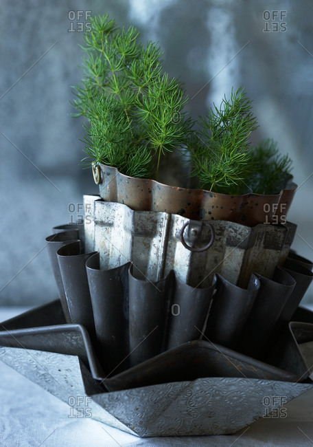 Stack of vintage cake tins with plant
