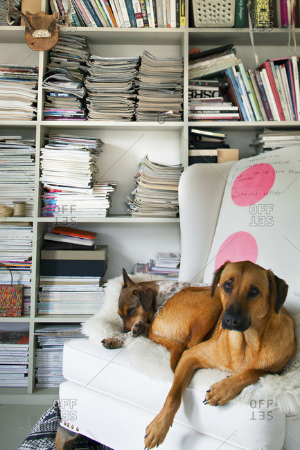 Dogs resting on an armchair