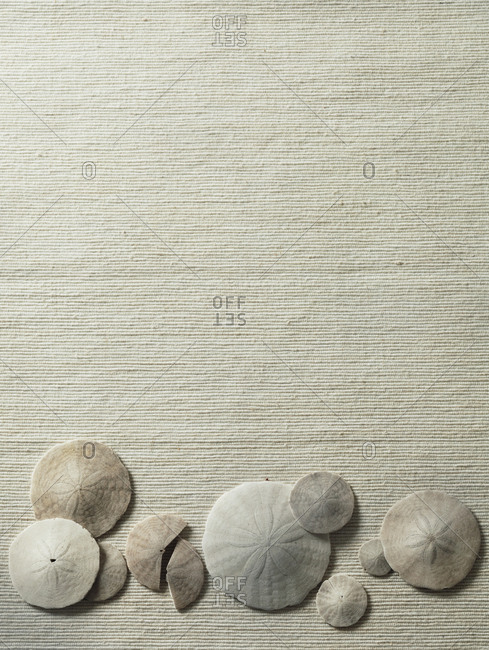 Sand dollars on beige fabric