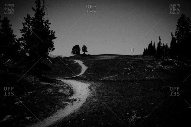 Walking Path in Meadow - Offset