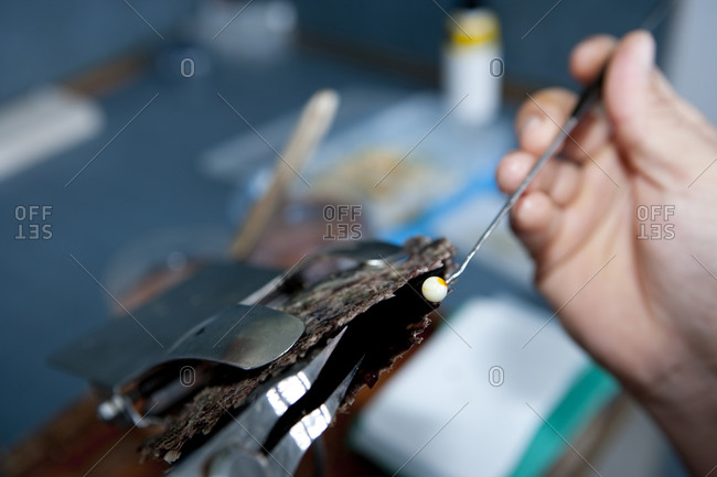 Seeding an oyster in order to cultivate a cultured pearl.