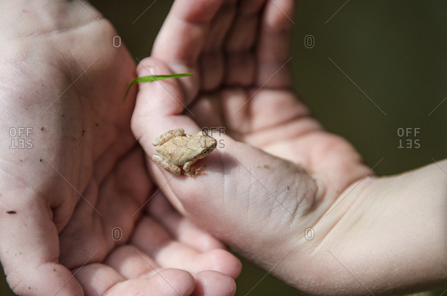Kid holds a frog