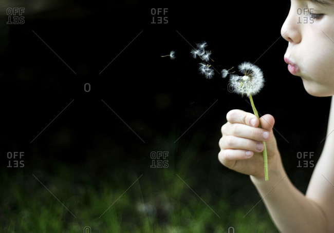 Little child blowing dandelion