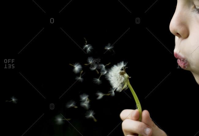 A child blows on a dandelion