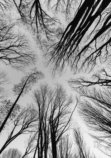 Low angle view of bared trees