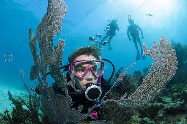 Scuba diver framed by sea fan