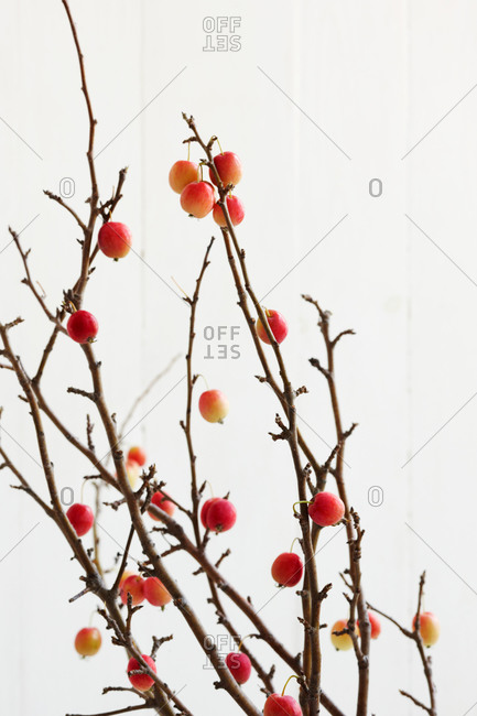Crab Apple Branches On White Background Stock Photo Offset