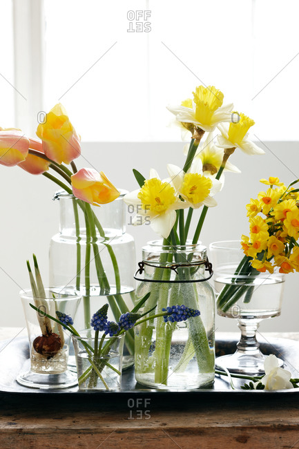 Arrangement of purple Grape Hyacinth, yellow Tulips and two different Narcissus