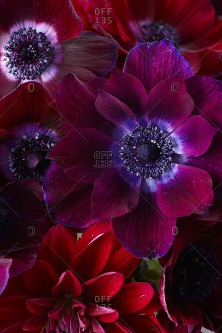 Purple flower details