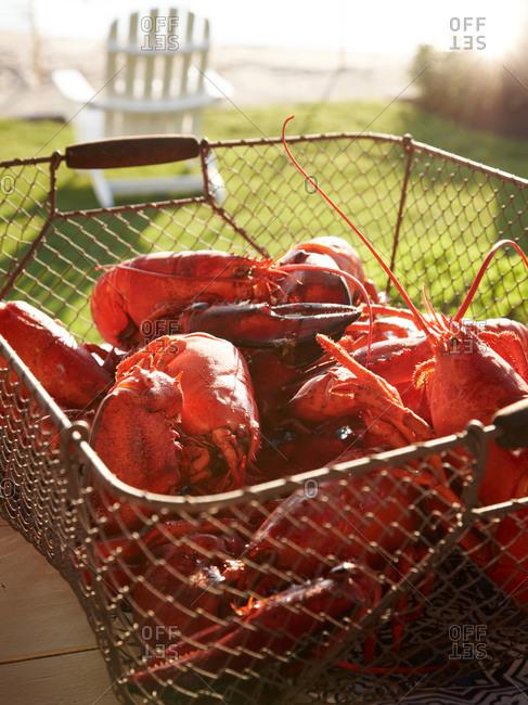 Heap of lobster in basket