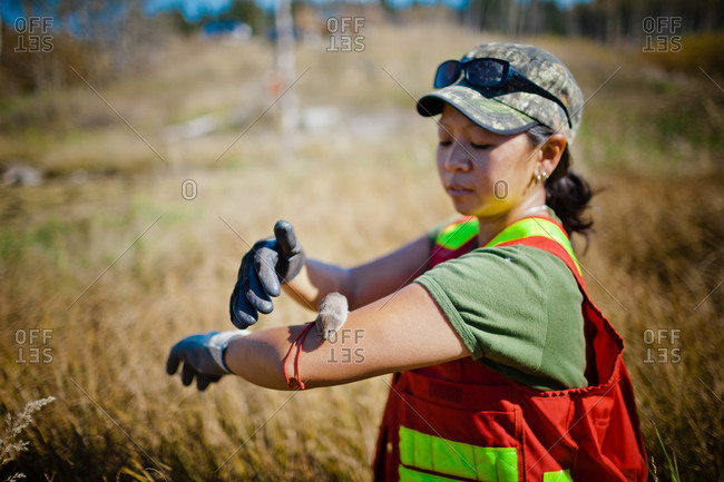 A female researcher with a vole on her arm