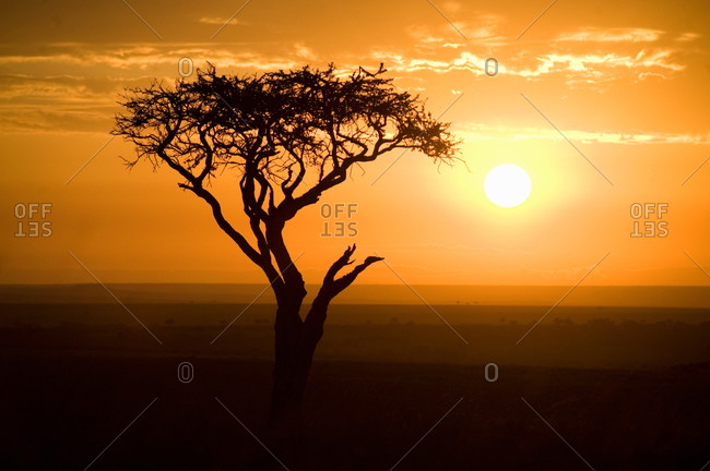 Silhouette of tree at dusk, Tanzania