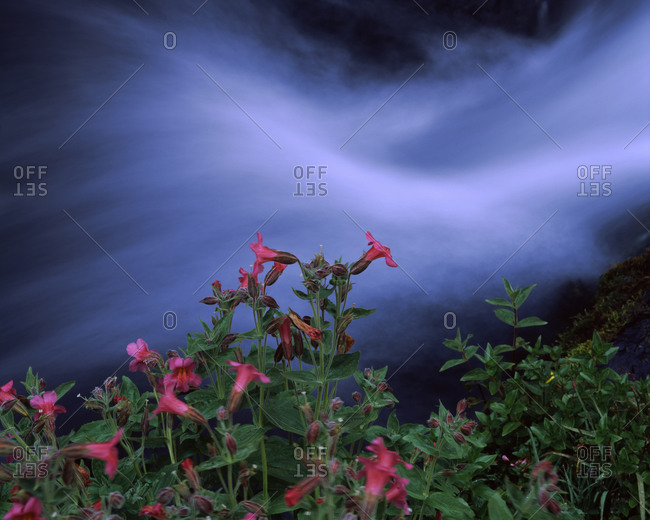 Flowers on plants, Castle Crest Wildflower Garden Trail, Munson Creek