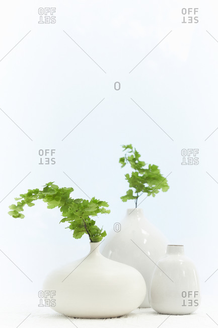 White vases with green branches