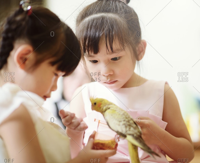 Kids playing with cockatiel