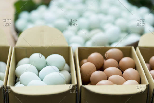 Brown and blue eggs in boxes