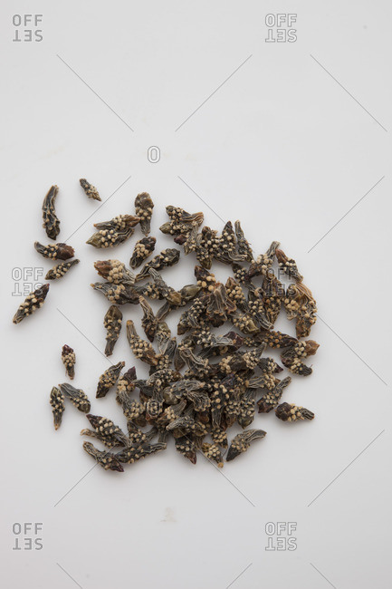 Dried cholla cactus buds