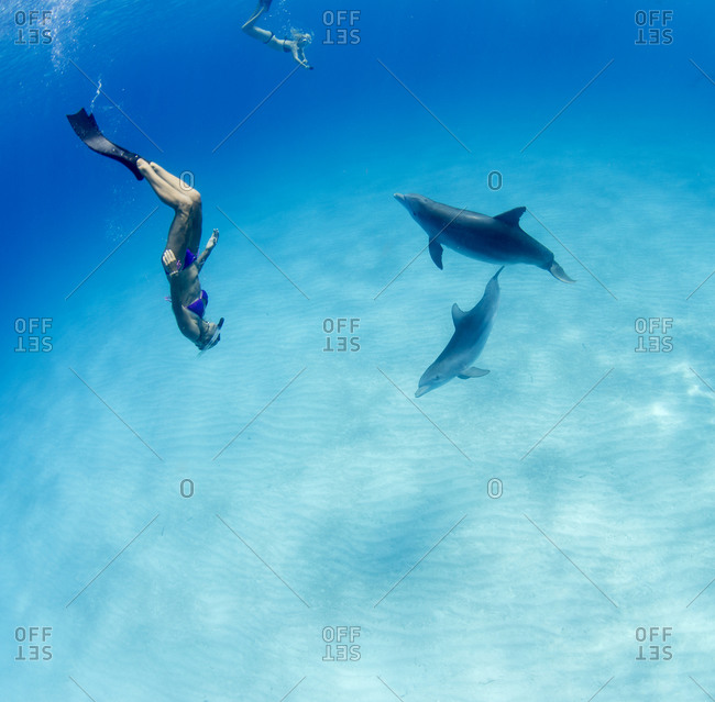 Frolicking with playful dolphin - Offset
