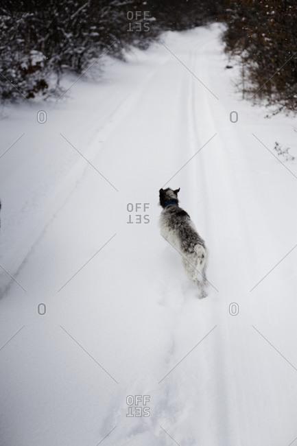 Rear view of dog running away