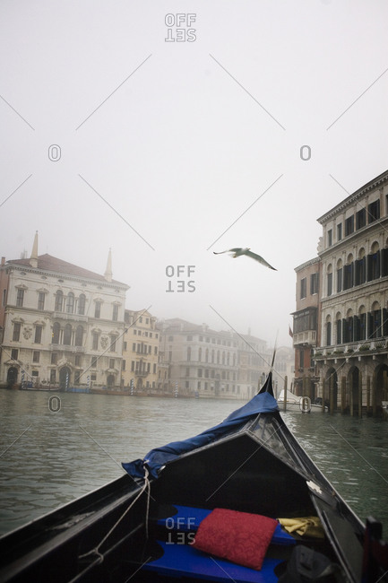 Seagull flying over a gondola in Venice