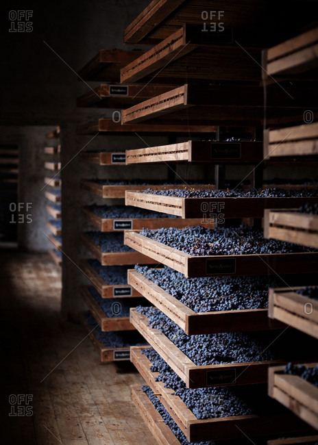 Concord grapes stored at a winery