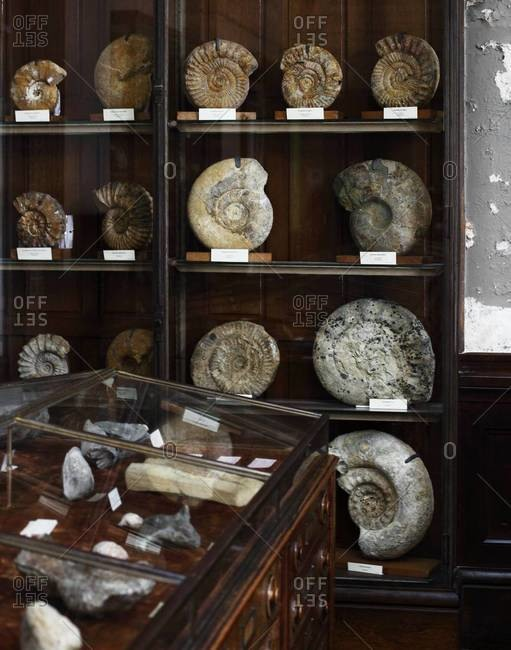 Fossils, shells and mineral stones in museum