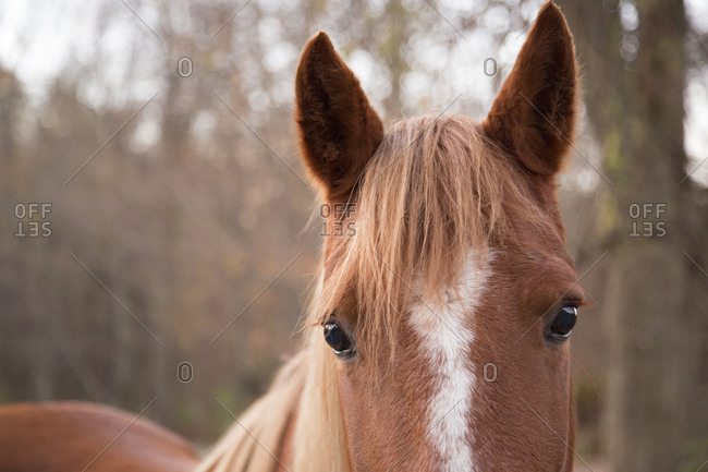Portrait of a horse at attention
