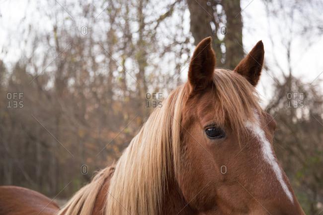 A head of an alert horse