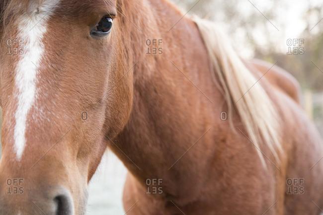 Close up a horse's head