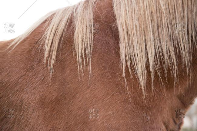 Close up a horse's neck