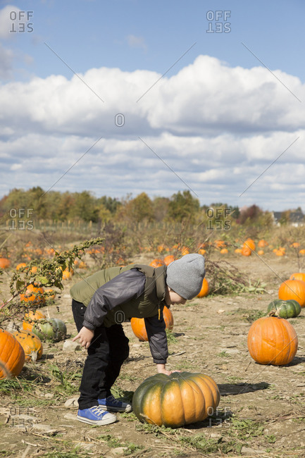 Boy examining a pumpkin