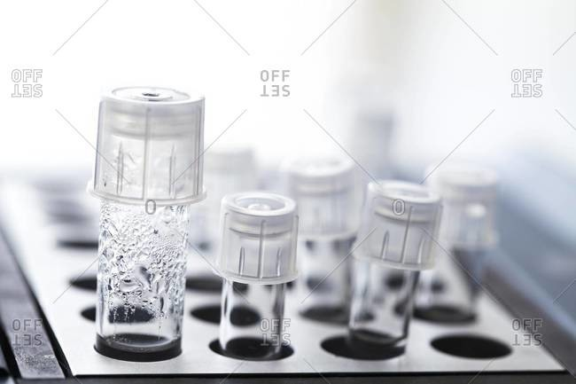 Harvested human eggs, used for in vitro fertilization (IVF) treatment