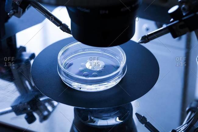 IVF treatment embryo culture dish, used for in vitro fertilization (IVF)