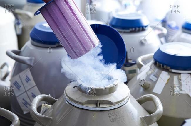 Egg storage for in vitro fertilization (IVF). Tube of eggs in cryogenic (frozen) storage
