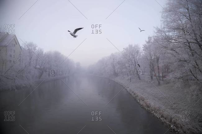 Germany, Bavaria, Landshut, Isar river and seagulls, morning mist