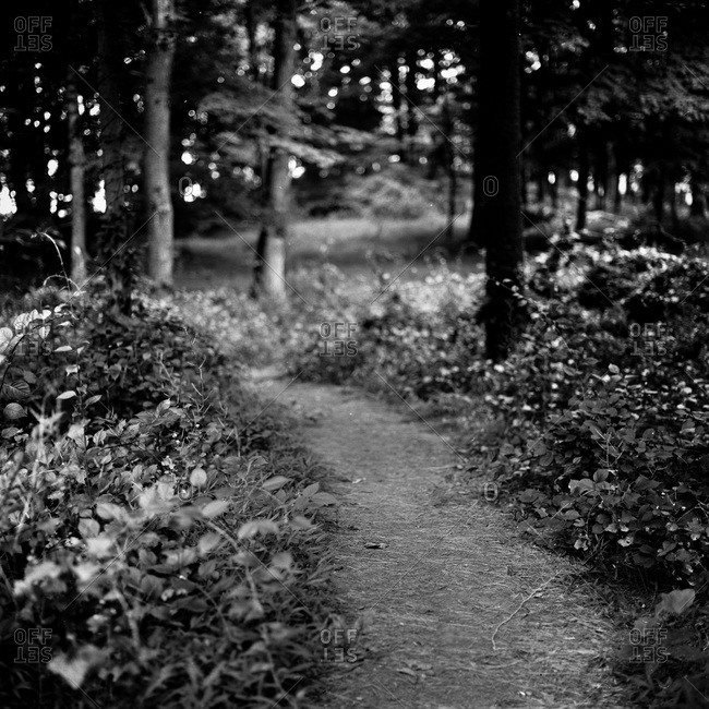Selective focus of trail in woods, Connecticut