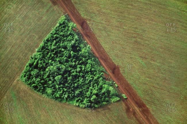 Rainforest remnant surrounded by farmland near Iguacu National Park, Brazil