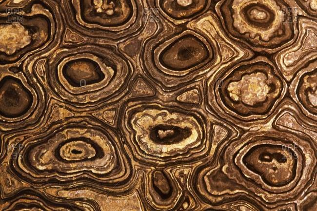 Close-up of the cross section of Stromatolite fossil showing its natural patterns, found in Bolivia