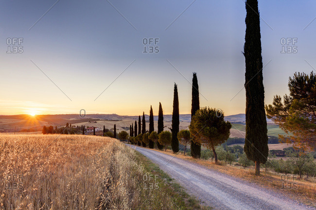 Val d'Orcia, Italy - June 24, 2012: Mediterranean cypress trees (Cupressus sempervirens) lining country road at sunrise in summer