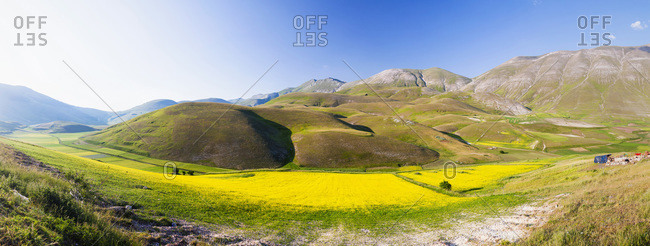 Panoramic View of Canola Fields Blooming underneath Mountains on Piano Grande, Monti Sibillini National Park, Umbria, Italy
