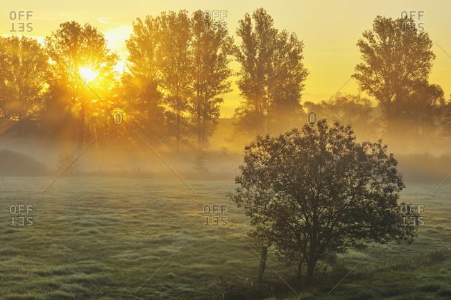 Sunbeams break through Row of Trees in Morning, Flieden, Hesse