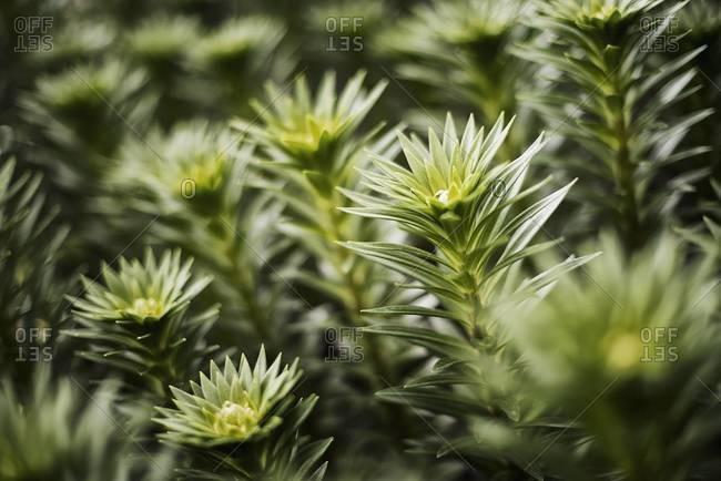 Organic plants growing in greenhouse